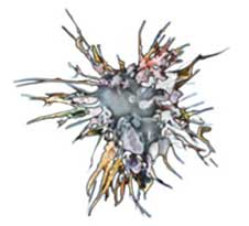 一般的なDC細胞の姿。抗原伝達のために表面積が広いのが有利。
